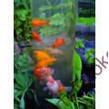 Kép 4/5 - FISH TOWER 66