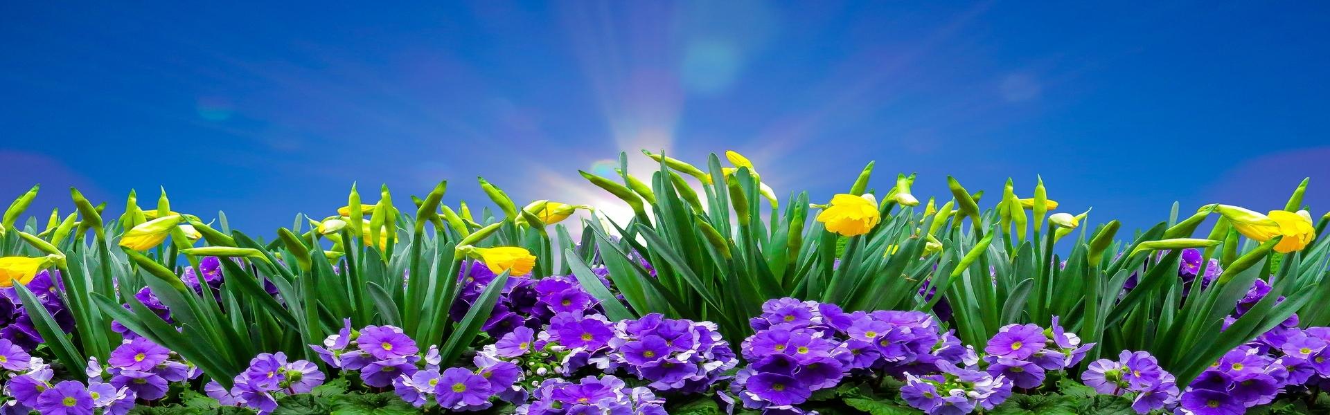 Itt a tavasz! Virágültetésekhez ajánljuk.